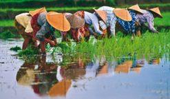 Voyage au Vietnam, que du bonheur pour moi