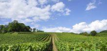 Vin Pessac Leognan: le vin du Sud Ouest des connaisseurs.
